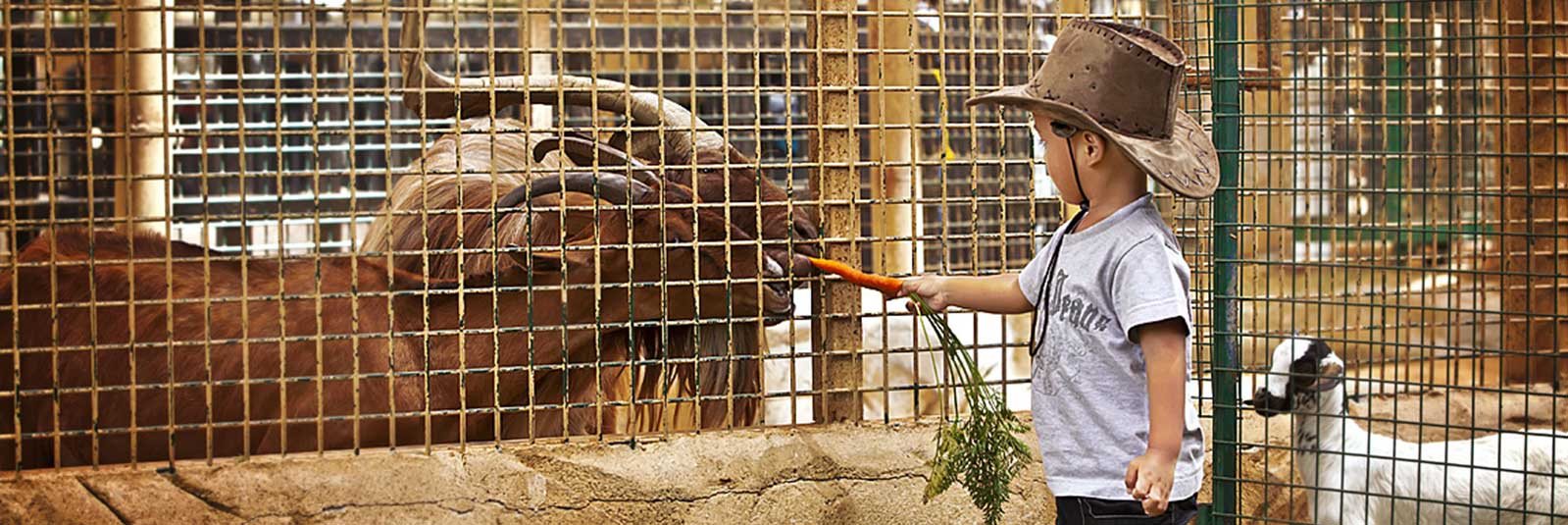 Abu-Dhabi-Emirates-Zoo