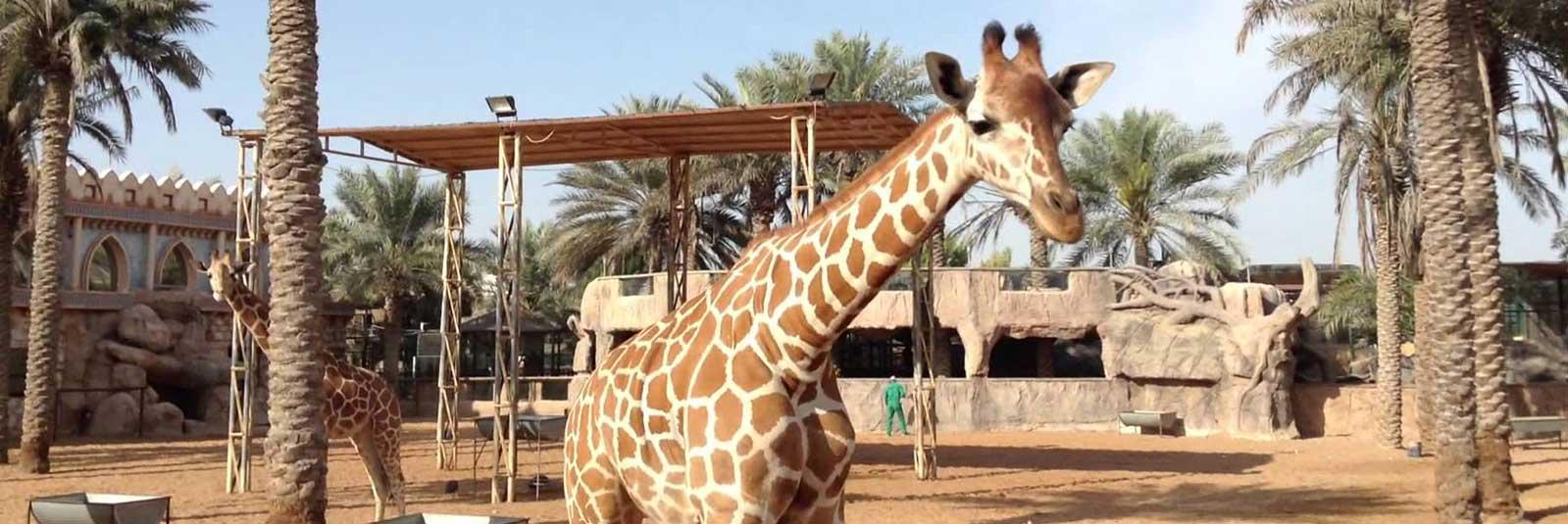 Emirates-Zoo.jpg