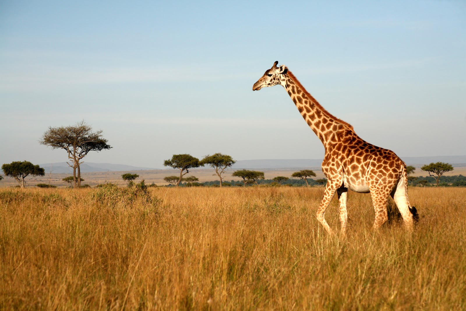 Kenya - Breaktime