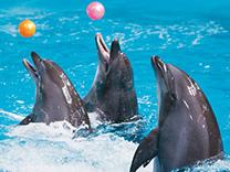 Dubai Dolphin